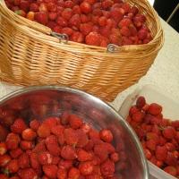 Q+A: Strawberry Farmers, Allen and Tonette McEwan, say farewell.