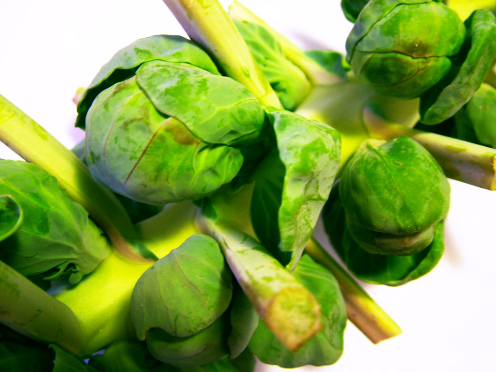 Recipe of the Week: Oregano Brussels Sprouts and Pumpkin Cheesecake ...