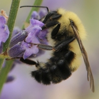 Gardening: This Spring, Plant Something for the Bees