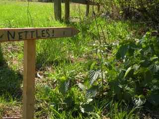 nettle sign 2
