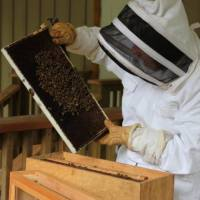 Shout Out: Delorez Franz-Los, bee-keeper and sharer