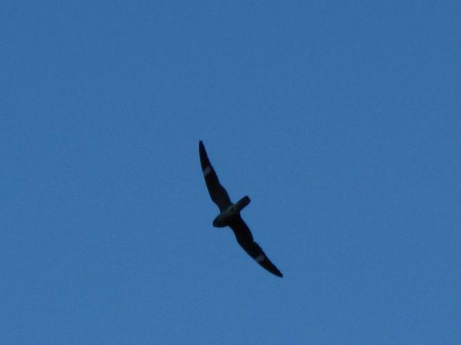night hawks 029