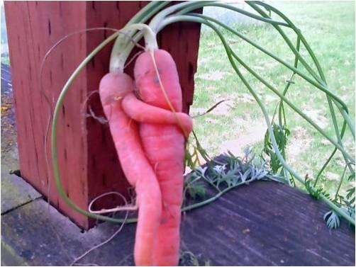 kinky_carrots