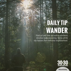 wander-01