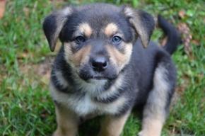 wag-puppy