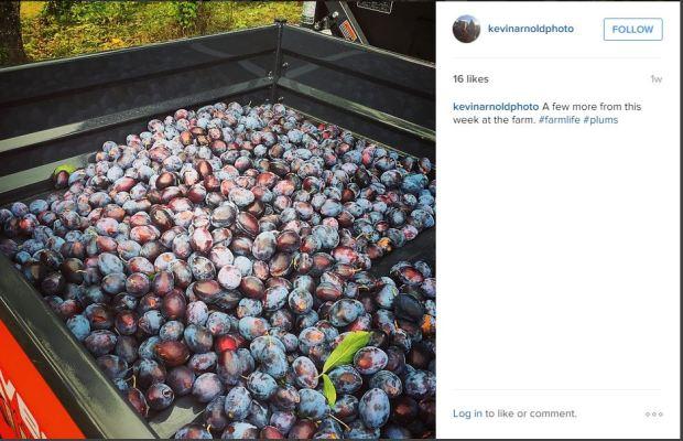 instagmra plums