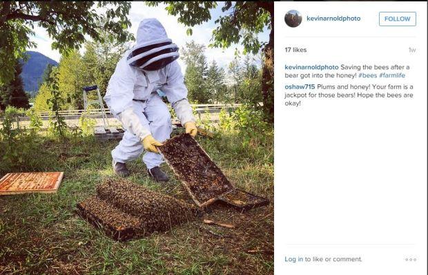 instagram bees