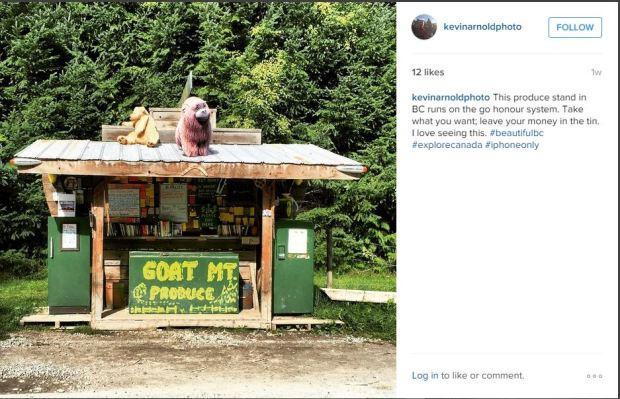 instagram goat mtn