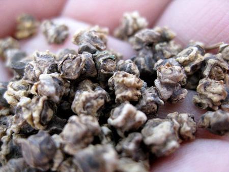 beet seeds 2