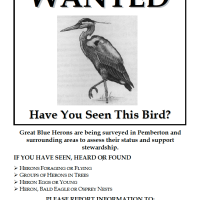 Birdwatchers WANTED: Have you seen a Great Blue Heron?