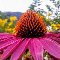 Bee's eye view of the garden, with Victoria Saddleman