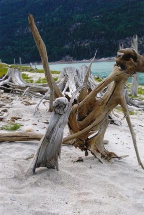 connie driftwood