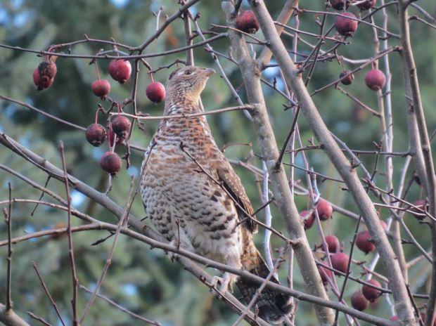 fall-birds-009