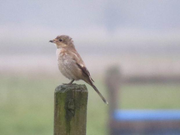 fall-birds-024