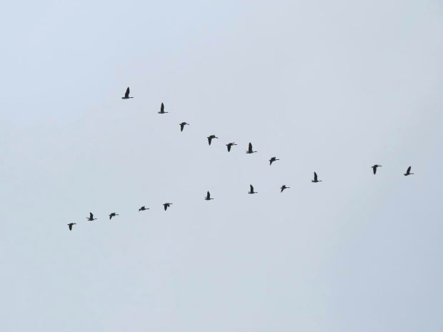 fall-birds-046