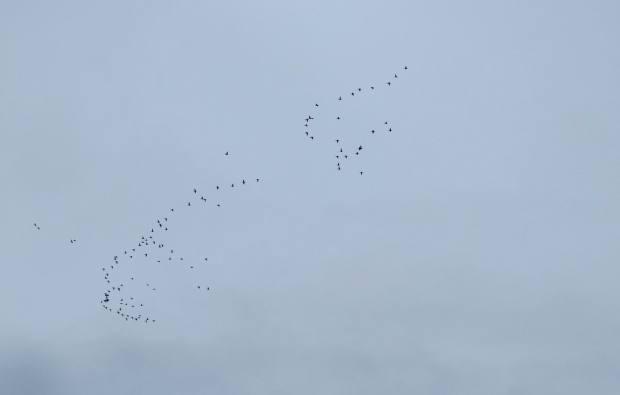 fall-birds-050