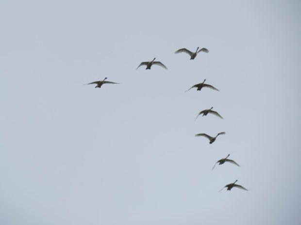 fall-birds-056