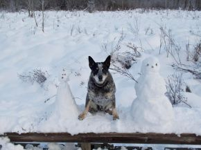 connies-snowpup