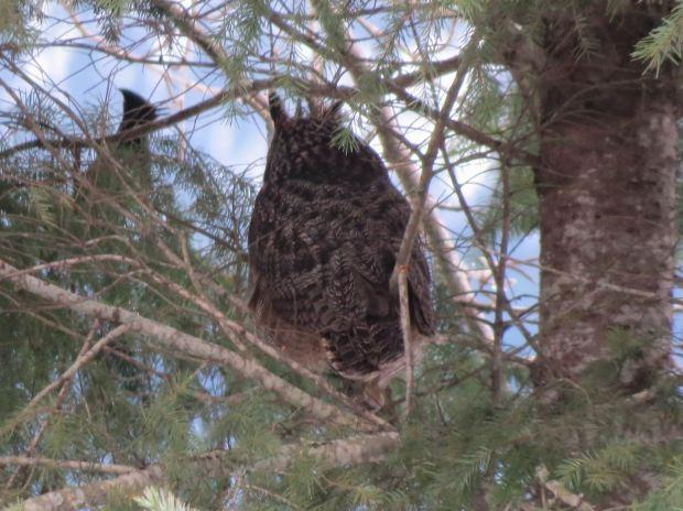 owl-019