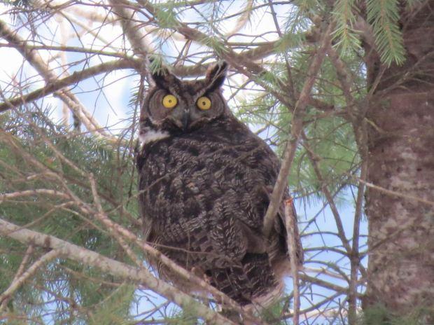 owl-022