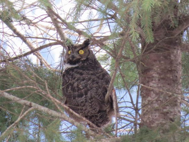 owl-024