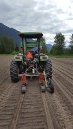 parsnip-seeding