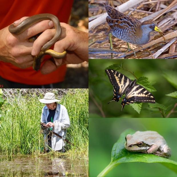 Riverside wetlands biodiversity