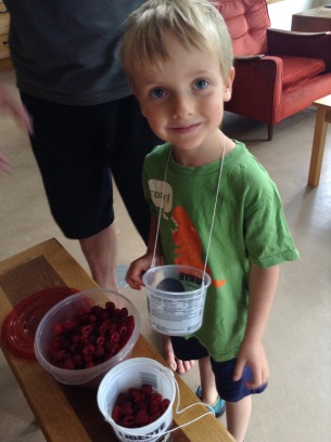 raspberry picking july 2017