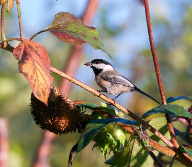 connie's bird