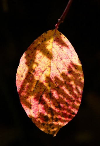 Fall Leaves series 1 by Connie Sobchak