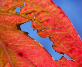 Fall Leaves series 2 by Connie Sobchak