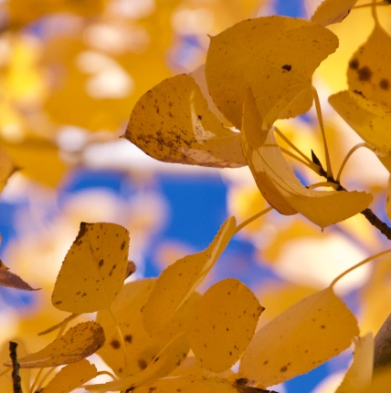Fall leaves series 4 by Connie Sobchak