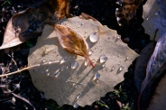 Fall leaves series 5 by Connie Sobchak