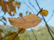 Fall Leaves series 7 by Connie Sobchak