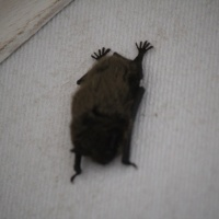 Starting the day right: Marilyn Marinus reveals what happens when you wake up to bats in your house
