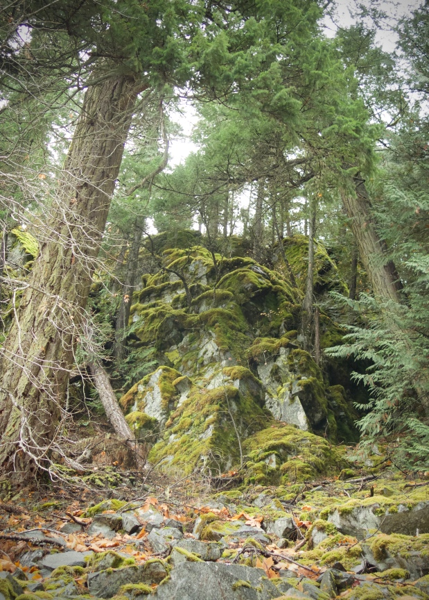 moss covered rockslides by connie sobchak