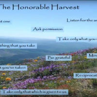 The Honorable Harvest: thinking more mindfully about what it means to be a consumer, forager, hunter, human