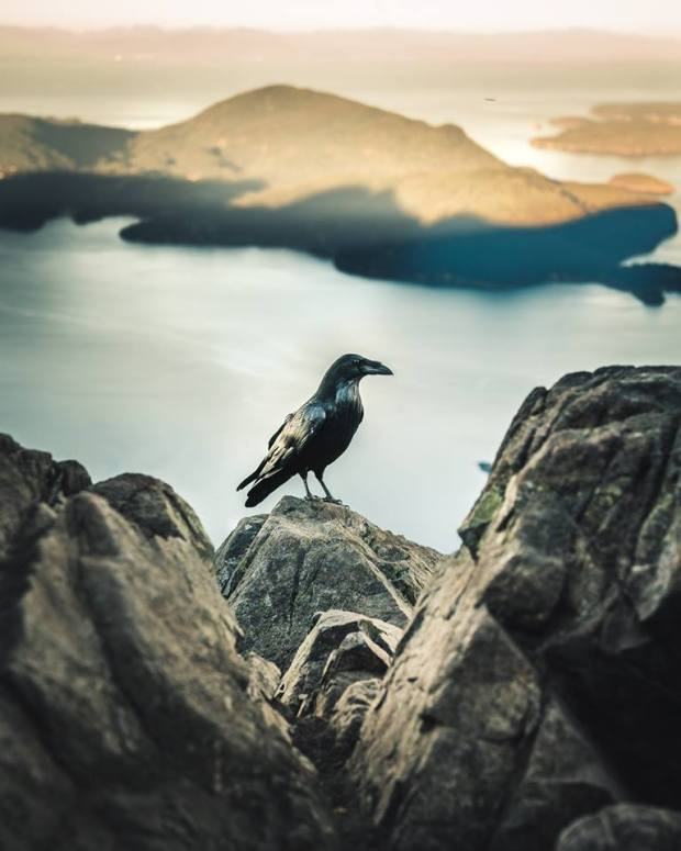 David Ward summit bird caw caw