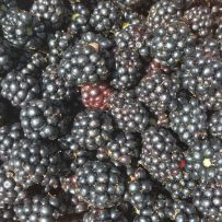 Himalayan-Blackberry-B.-Johnson-4-1-750x750