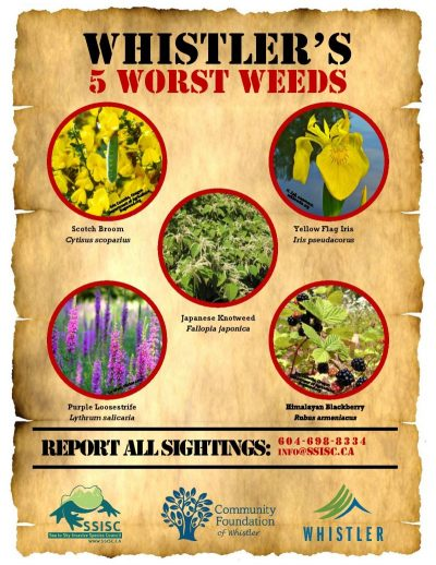 Whistler-s-5-Worst-Weeds-ALL-e1528740077321