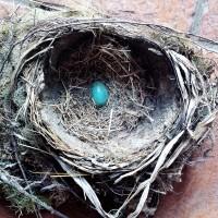 Serendipity & Robin's Eggs