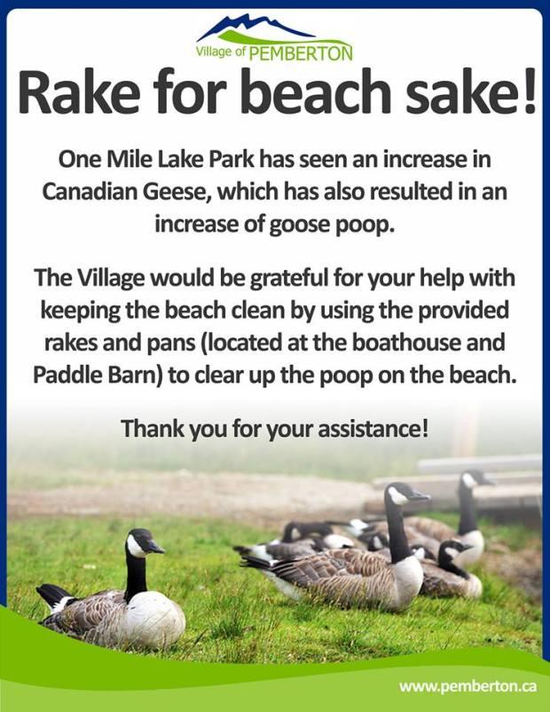 Village of Pemberton goose poop program