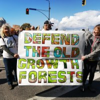 Múc and the Importance of Old Growth Forests