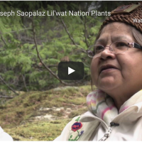 Learning about plants with Saopalaz Lucille Joseph