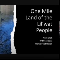 Take a plant walk around One Mile Lake, and look with a Lil'wat lens, thanks to a new video from Tanina Williams and Saopalaz